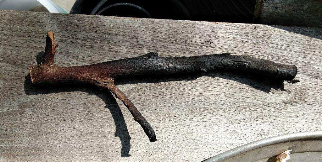 Partially burned wood with charcoal.